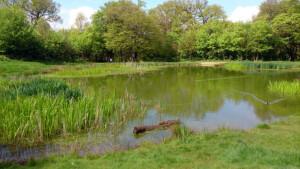 Barn Hill pond