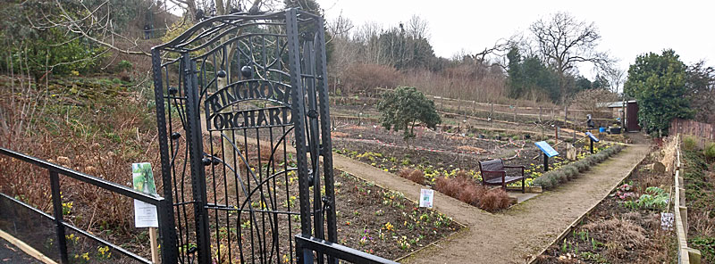 Ringrose Orchard
