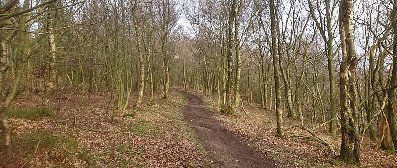 Woodland above Kildale
