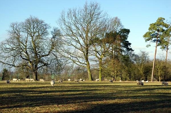 Moyn's Park