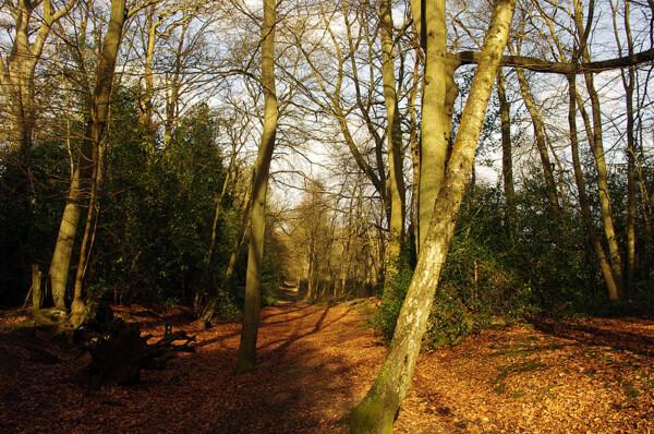 Runfold Wood