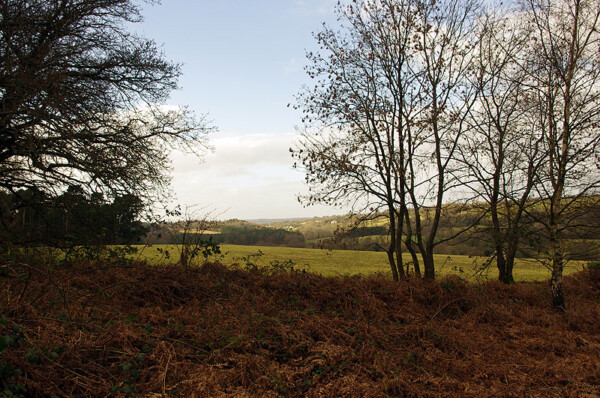 From Totford Hatch