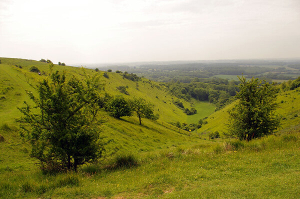 Broad Downs