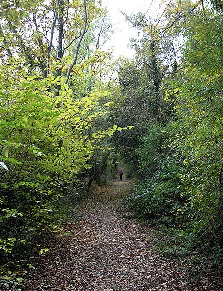 Descent into Linton