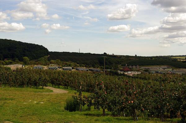 Fruit-picker's camp