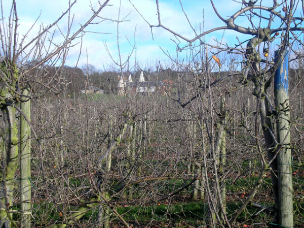 Orchard beyond Shipbourne
