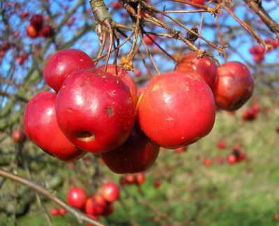 January fruit