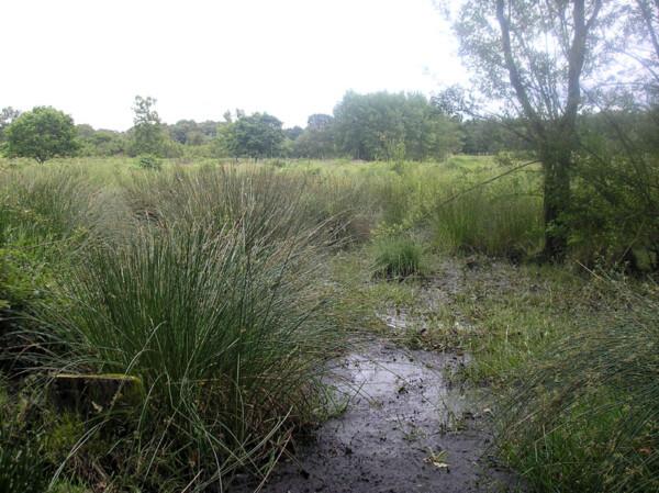 Hothfield Bogs