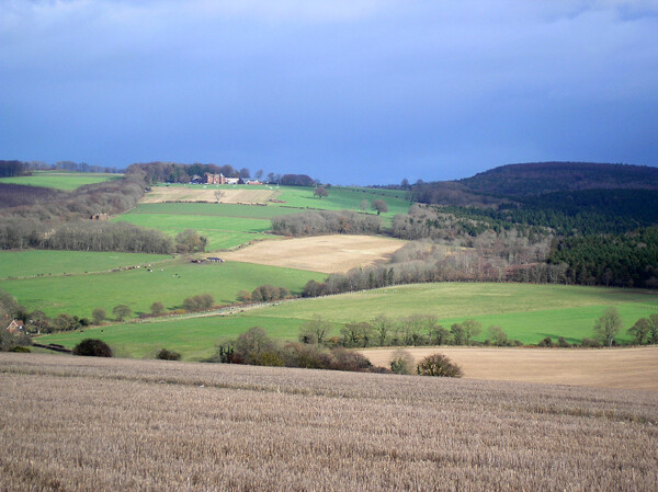 View from Chalton Down