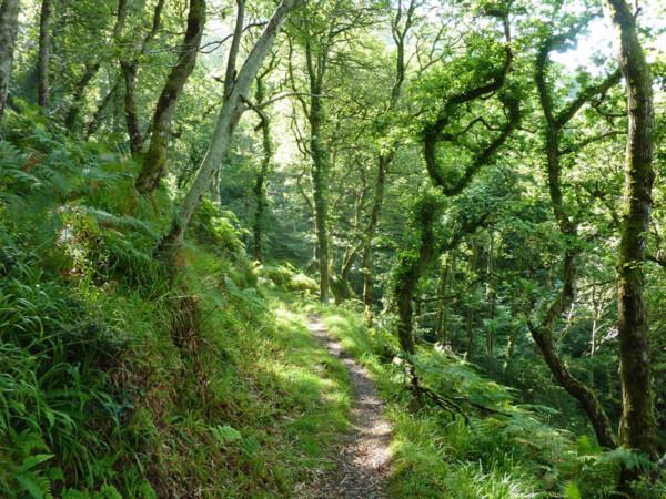Chubhill Wood