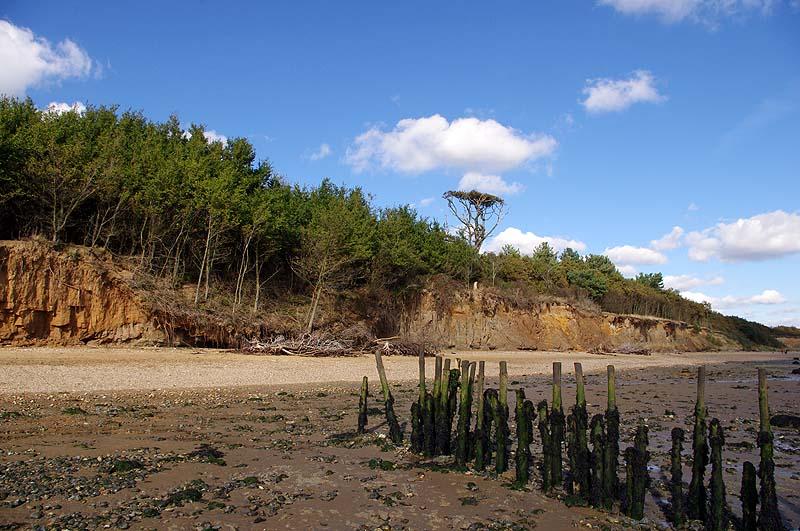Cudmore Grove, Mersea Island